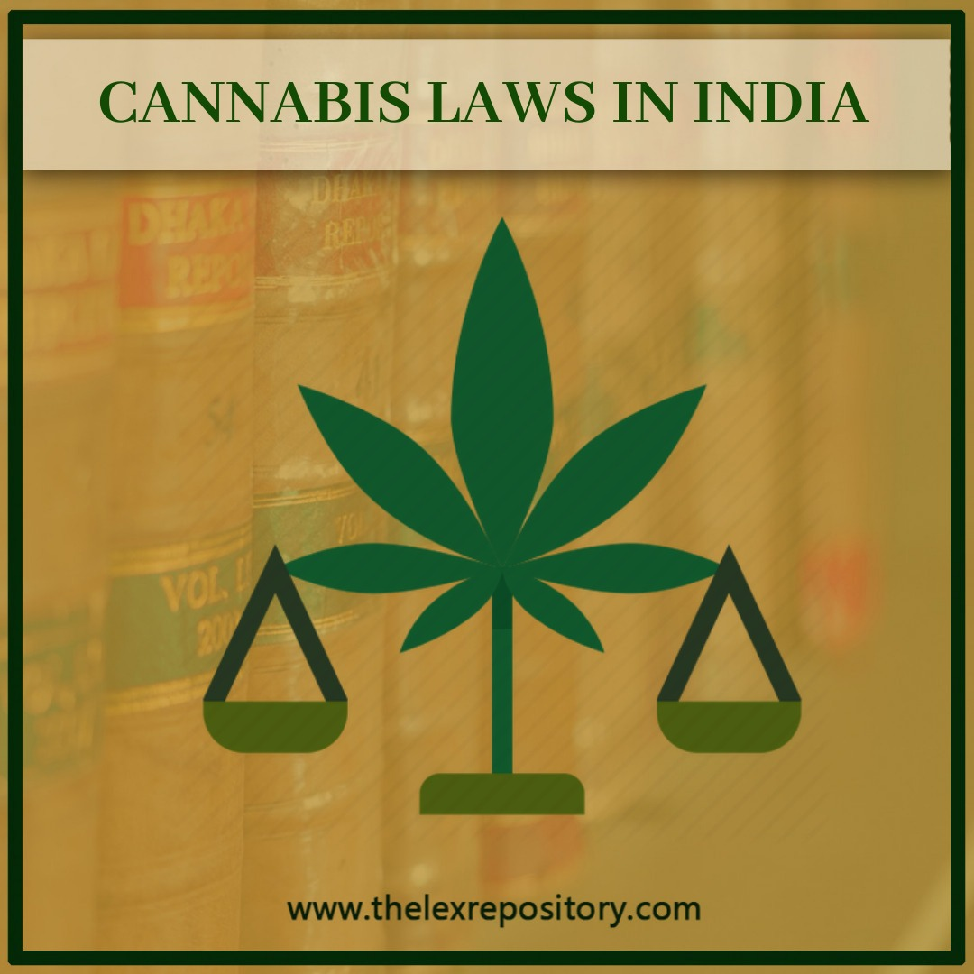 In India, Cannabis is devoured as bhang blended in thandai frequently burned-through during Holi and Mahashivaratri.
